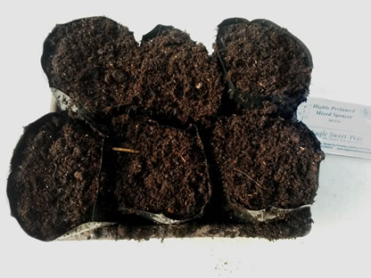 Top up the pot with dry compost from the bag