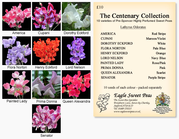 Centenary Seed Collection<br>(Old Fashioned Grandiflora)