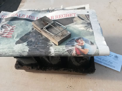 Cover with newspaper to stop compost drying out